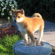 Natsu 8 semaines à la maison