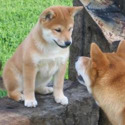 Natsu et Hoshi