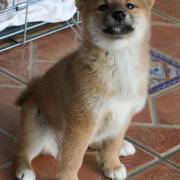 Kimiko 8 semaines