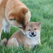 Kimiko et Natsu