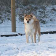 Natsu Hime janvier 09