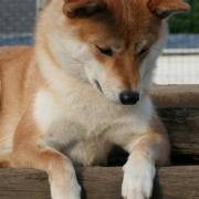 Natsu Hime  mai
