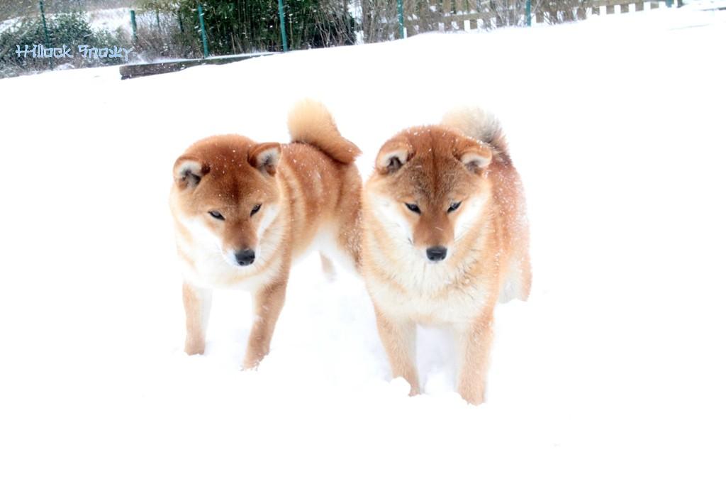 Ôkami & Shinichirou