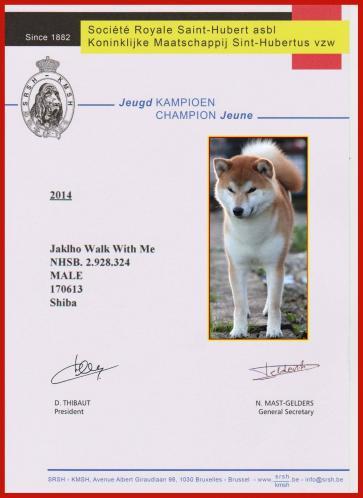 champion junior de belgique shiba