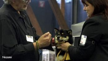 eurodogshow nozomi shiba