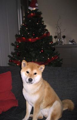 Matsu Noel
