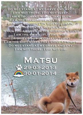 Shiba Matsu