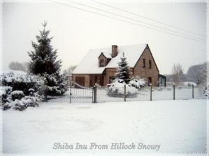 Elevage shiba inu from hillock snowy Binche hainaut Belgique