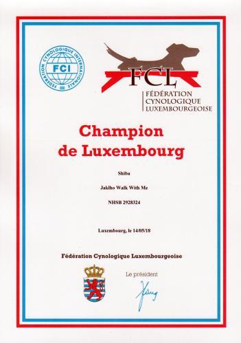 shiba champion du luxembourg