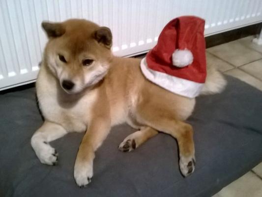 Keiko Noel