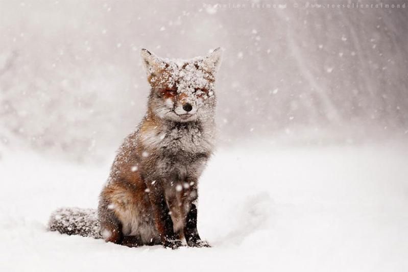 Amazing fox photos