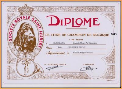 Champion jeune de Belgique