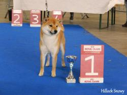 Shiba dog show mons