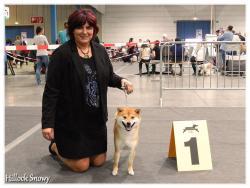 Shiba dog show luxembourg