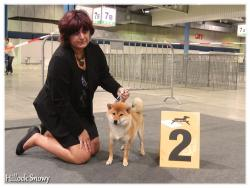 dog show luxembourg