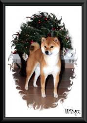 Ikkyu shiba de Noel 2011
