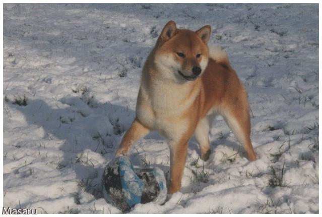 Shiba Masaru dans la neige