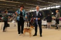expositions canine shiba Gent