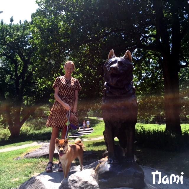 Nami le shiba inu et balto le chien de traineau