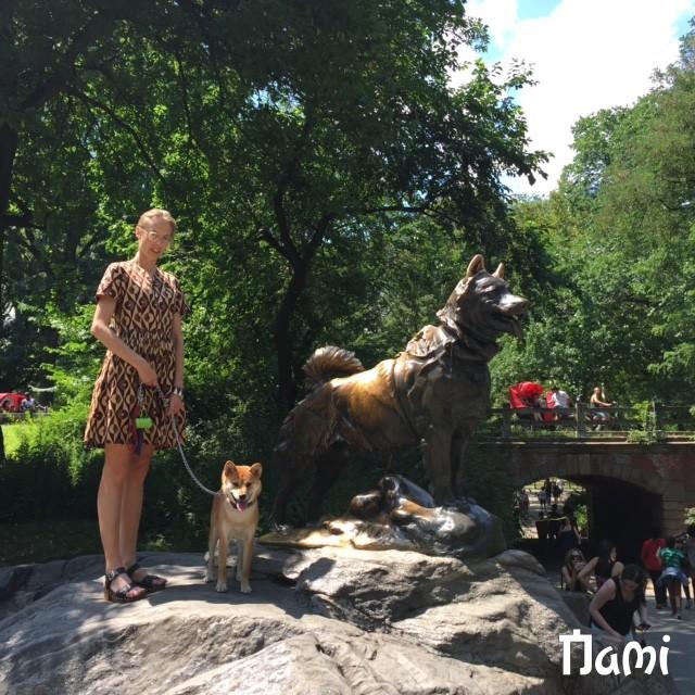 Nami le shiba  et Balto le chien de traineau