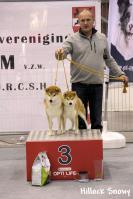 shiba presentation couple expo louvain