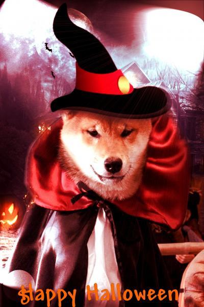 happy halloween shiba