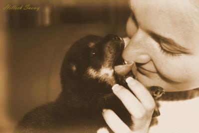 Love shiba puppy