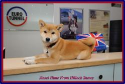 Shiba Jinsei Hime FHS