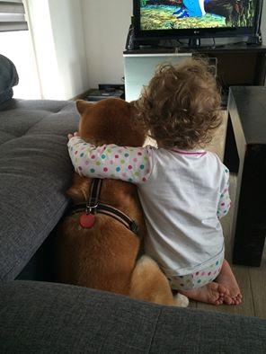 le shiba et l enfant