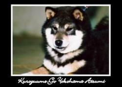 kuroyuume-go-yokohama-atsumi.jpg