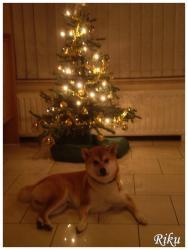 Riku Noel 2011