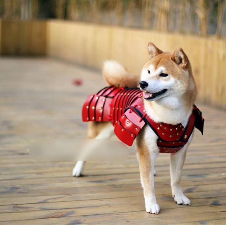 shiba samurai