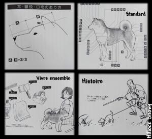 le shiba standard et histoire