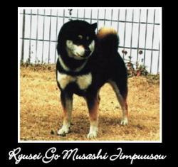 ryusei-go-musashi-jimpuusou-1.jpg