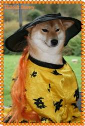 Kimiko shiba halloween