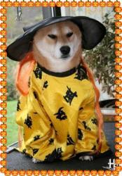 Hoshi shiba halloween