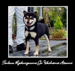 tenkuu-ryokuryuume-go-yokohama-atsumi.jpg
