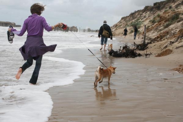 Wissant shiba à la plage