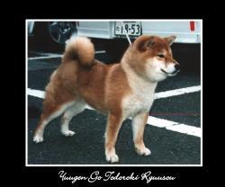 yuugen-go-todoroki-ryuusou.jpg