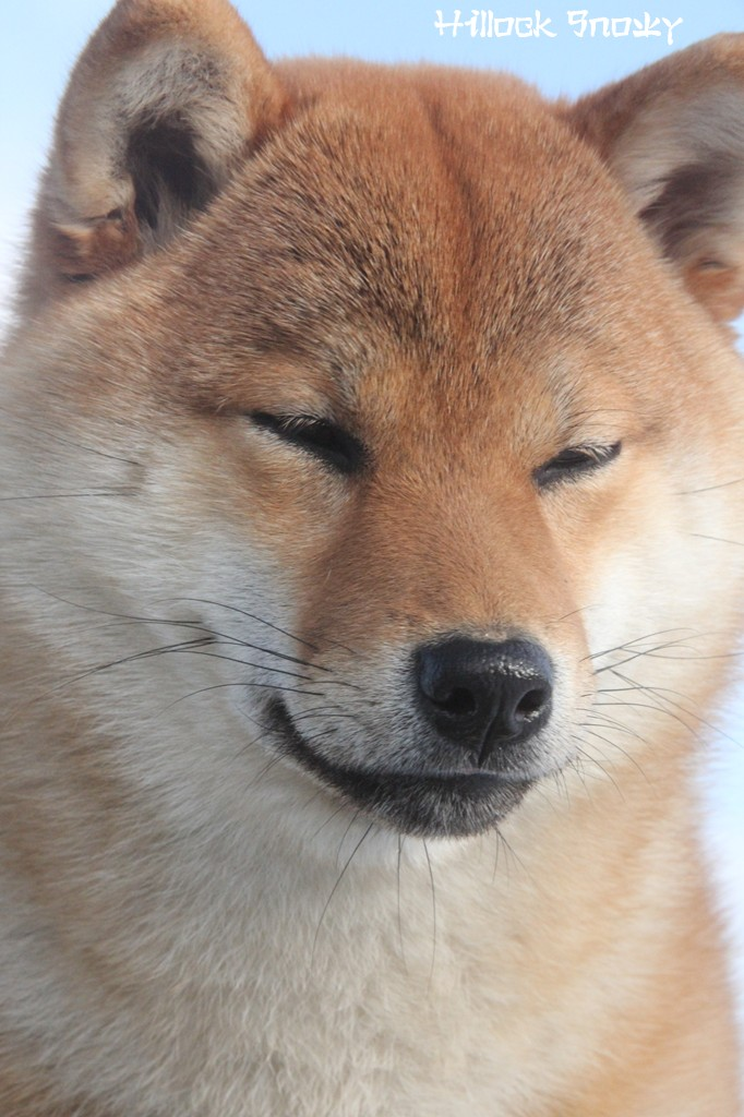 Ôkami Amaterasu