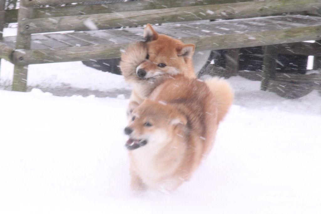 Shin & Ôkami