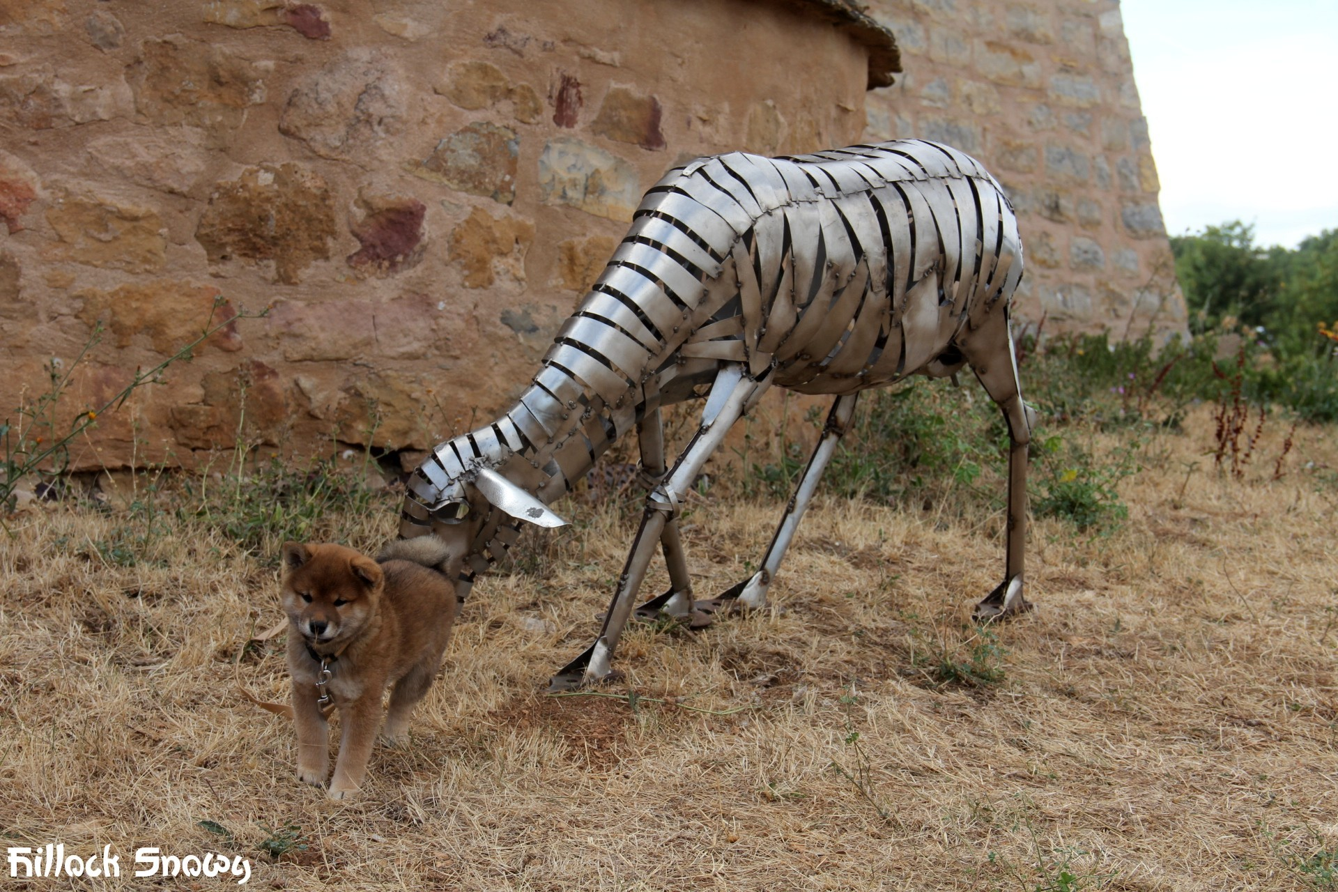 Attaque de chèvre roquefort