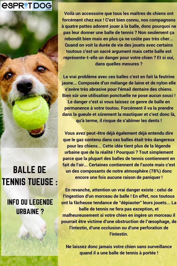 La balle de tennis, c'est « LE » jouet par excellence du chien
