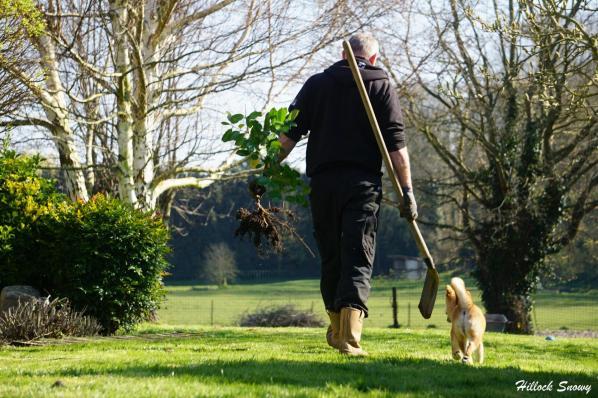 Le shiba jardinier