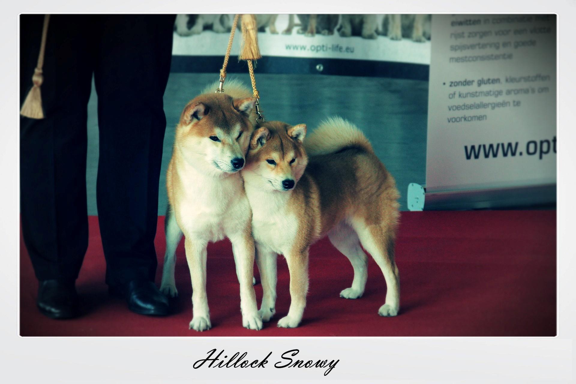 Wallonia Dog Show 2015 Shiba