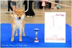 Masaru Best puppy Mons show